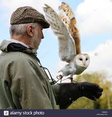 Yarak Birds Of Prey Centre, Devon, Barn Owl Tyto Alba With Visitor ... Barn Owl Looking Over Shoulder Perched On Old Fence Post Stock Eccles Dinosaur Park Carnivore Carnival The Salt Project Barn Moving Head Side To Slow Motion Video Footage 323 Best Owls Images Pinterest Owls Children And Free Images Wing White Night Animal Wildlife Beak Predator 189 Beautiful Birds Sat A Falconers Glove Photo Royalty Image Paris Owl 150 Pictures Snowy More