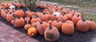 Pumpkin Patch Petting Zoo Illinois by Your Guide To Pumpkin Farms And Halloween Attractions In Northern