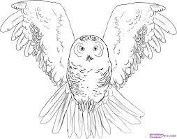 Drawn Owlet Step By 5