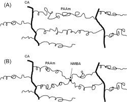 Figure 6 Schematic Diagram Of The Network Structures Polyacrylamidecellulose Acetate Hydrogels Obtained A Without NN Methylenebisacrylamide