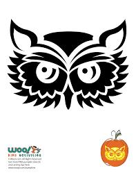 Owl Pumpkin Template by Feathered Owl Pumpkin Stencil Woo Jr Kids Activities