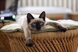 urine de chat pipi de chien comment nettoyer mon canapé