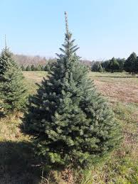 Christmas Trees Types by What U0027s The Environmental Impact Of Christmas Trees