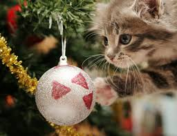 Are Christmas Trees Poisonous To Dogs Uk by Cat Attacking The Christmas Tree Animal Friends