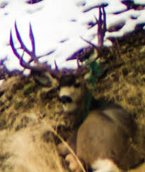 Shed Hunting Southern Utah by Shed Hunting Hunting News Gohunt
