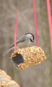 Easy Toilet Paper Roll Bird Feeder