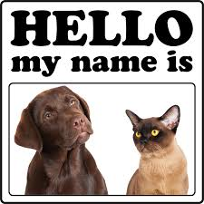 popular cat names top 10 most popular and cat names of 2013 dogtime