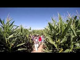 Livermore Pumpkin Patch by Corn Maze Livermore Ca 10 04 2015 Youtube