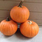 The Great Pumpkin Patch Pueblo Colorado by Vic Mauro Produce Fruits U0026 Veggies 1037 35th Ln Pueblo Co