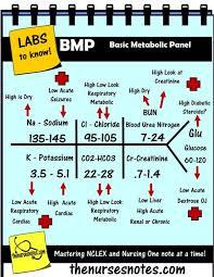 best 25 bun blood test ideas on bun levels elevated