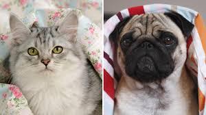 haustiere warum katze und hund im bett nichts verloren