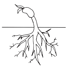Plant Life Cycle Clipart Worksheet Coloring Page