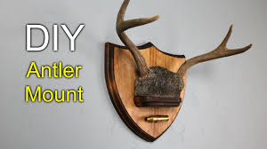 diy antler mount how to make youtube