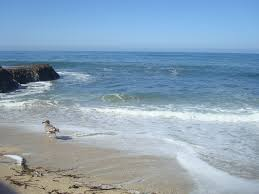 Half Moon Bay Pumpkin Festival Winner by Half Moon Bay California Swam In This Ocean At 16 At Night After