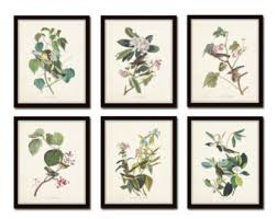 Audubon Birds Print Set No 24 Botanical Prints Illustration Collage Vintage