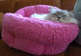 Cuddler Dog Bed by Urban Paw Luna Orthocomfort Cuddler Cat Bed In Sherpa Fuschia Review