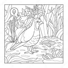 Coloring Book Quail Colorless Illustration Letter Q Vector By Ksenya Savva