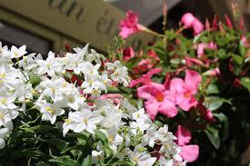 vitrine fete des meres fleuriste nos fleurs pour la fête des mères un eté à la cagne