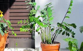 9 pflanzen fürs schlafzimmer luftreinigend pflegeleicht
