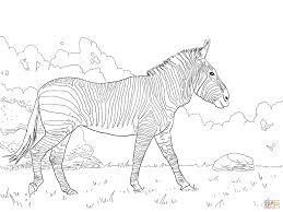 Baby Zebra Coloring Pages Cute Ba Page Free Printable For Kids