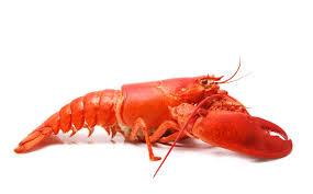 Dresser Hill Charlton Ma by List Of Most Popular Seafood In U S