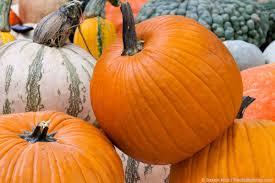 Connecticut Field Pumpkin For Pies by Pumpkins