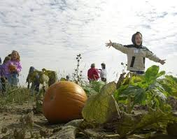 Auburn Pumpkin Patch by Gourd Times In Patches Of Past Entertainment The Journal Gazette