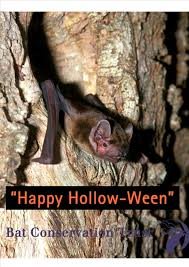 Free Halloween Ecards With Photos by Ecards Bat Conservation Trust
