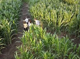 Free Pumpkin Farms In Wisconsin by Explore A Fun Corn Maze In Wisconsin Basse U0027s Taste Of Country