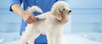 Do All Dogs Shed Fur by Dog Losing Hair The Possible Causes And What To Do Next Care