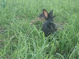 Can Rabbits Eat Pumpkin Seeds by Local Food And Farms Grassworks