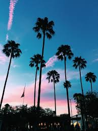 198 Best California Images On Pinterest Palm Trees Tree Tumblr