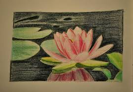 Lotus Flower Author drawing