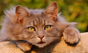 my cat has dandruff what causes cat dandruff and best ways to treat it the happy