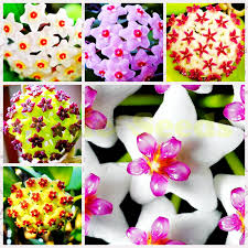 where to buy tulip bulbs fiori idea immagine