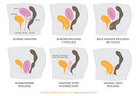pelvic floor and core foundations workshop burrell education