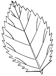 Coloring Pictures Of Leaves