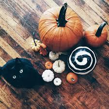 Milk Farm Dixon Pumpkin Patch by Best 25 Halloween Photography Ideas On Pinterest Halloween
