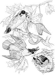 Click To See Printable Version Of Wood Ducks Coloring Page