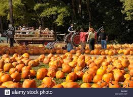 Caledonia Pumpkin Patch by Hayride Stock Photos U0026 Hayride Stock Images Alamy