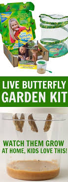 11 best butterfly life cycle images on Pinterest