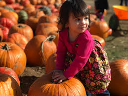 Pumpkin Patch Mobile County Al by Pumpkin Patch Season Is Upon Us Usa Local Information These Days