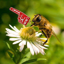 best 25 best flowers for bees ideas on flowers for