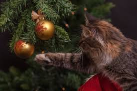 Are Christmas Trees Poisonous To Dogs Uk by Christmas Dangers Keeping Your Pet Safe Pawshake Blog