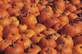 Spring Hope Pumpkin Festival Schedule by What Happens To All Of The Unpicked Pumpkins Wcco Cbs Minnesota