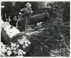 100 Used Logging Trucks The 1945 International Truck Sierra Nevada Museum
