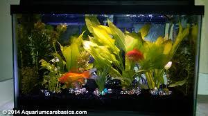 Extra Large Fish Tank Decorations by 10 Gallon Aquarium Dimensions Size Setup Ideas Kit Tips