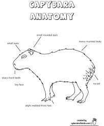Capybara Anatomy Outine Printout Worksheet