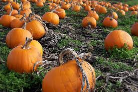 Pumpkin Patch Near Green Bay Wi by Pick Your Own Pumpkin Patches In Wisconsin Funtober