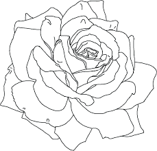 Printable Flower Petals Pattern Pictures Of Free Rose Petal Template Coloring Pages Full Size